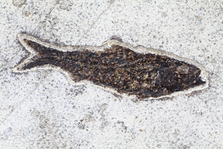 geology: fossil fish in the old sand as geology background