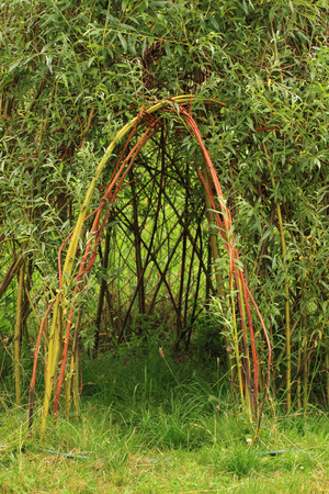 willow: willow door to small children house as natural background