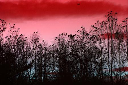 cuervo: Cuervos en el cielo como fondo agradable animales Foto de archivo
