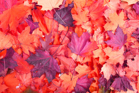 soft peak: nice color background from the autumn leaves Stock Photo
