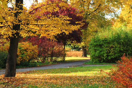 autumn park with color trees as nice natural background Stock Photo