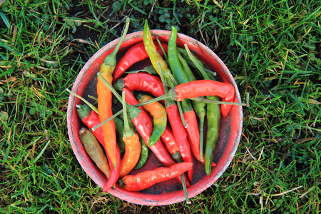 nice food: chilli in the grass as nice food background Фото со стока