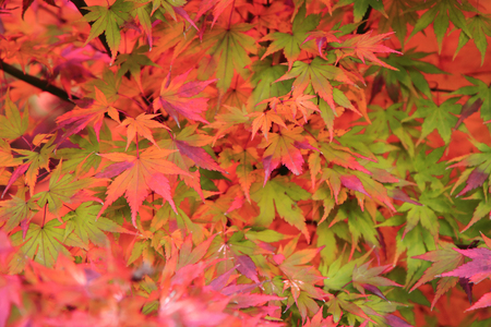 autumn color: autumn leaves as nice natural color background