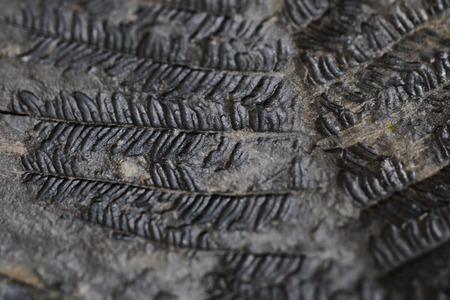 old fern fossil as nice natural background