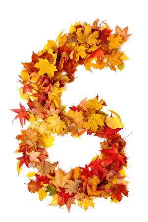 autumn color: alphabet sign from autumn leaf isolated on the white background