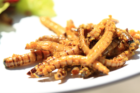 mealworm: grilled worm with curry as gourmet background