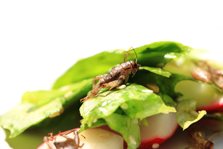 nice food: cricket and vegetable salad as nice food background Фото со стока