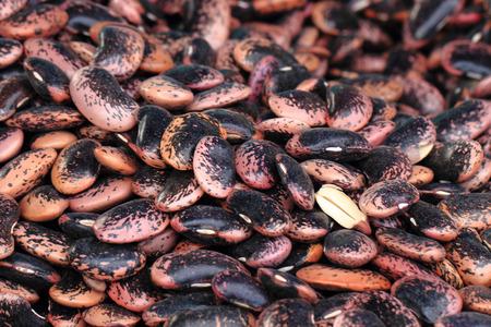 nice food: violet beans texture as very nice food background