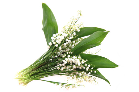 lily of valley as very nice natural backgrouns Stock Photo