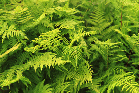 green fern leaves texture as nice natural background
