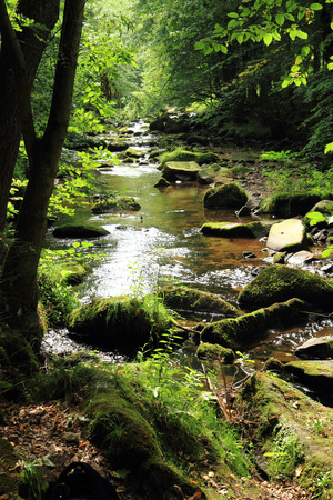 river in the green spring czech forest