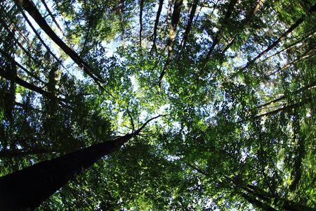 green dark forest look like green jungle