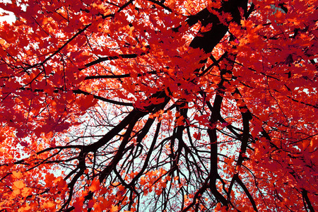 soft peak: autumn color leaves as very nice natural background