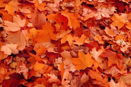 soft peak: autumnal leaves as very nice natural background