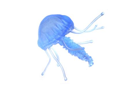 白い背景に分離された青いクラゲ 写真素材