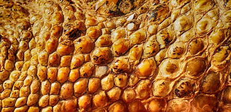 aligator skin texture as nice natural background