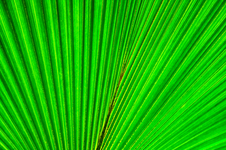 very nice natural leaf  background from my garden