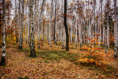very nice natural czech forest in the autumn Stock Photo