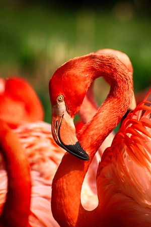 detail of flamingo head on the green background