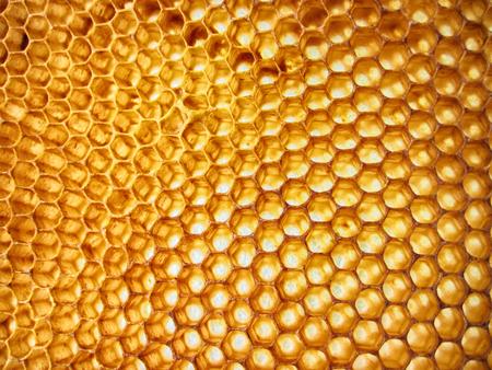 empty honey texture as nice bee background