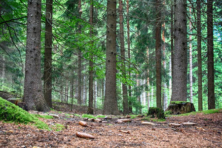 typical green czech forest in the spring Stock Photo