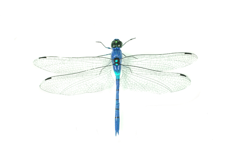 blue dragonfly isolated on the white background