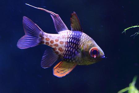 great barrier reef: exotic sea fish in the deep sea, aquarium