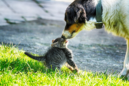 domestic: young cat and old dog are friends