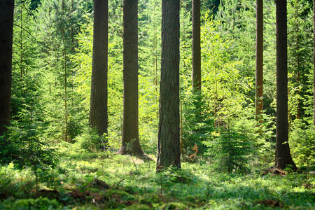 nice green forest from the czech republic