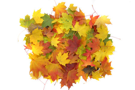 nice autumn color background from old leaves