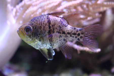 exotic sea fish in the deep sea, aquarium