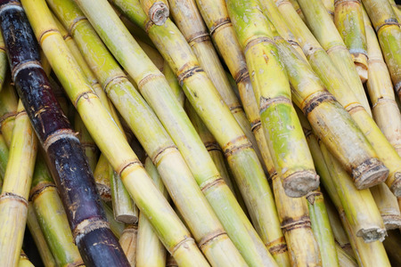 sugarcane plant texture as nice natural background Standard-Bild