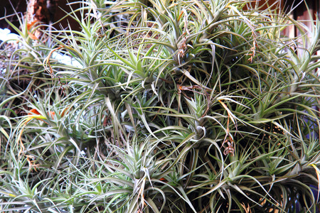 epiphyte plant texture as nice natural background 写真素材