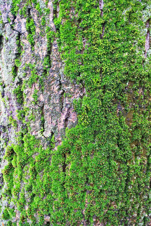 old bark with moss as nice background