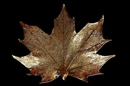 golden maple leaf isolated on the black background Stock Photo