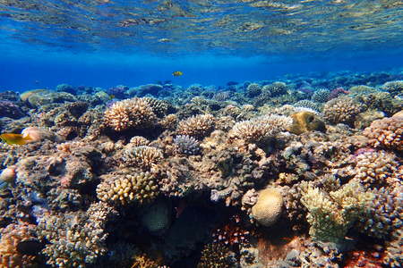 coral reef in Egypt with color nature
