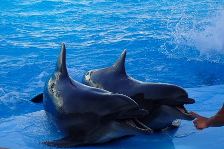 two dolphins are resting in the blue water