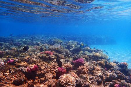 Arrecife de coral en Egipto con naturaleza de color
