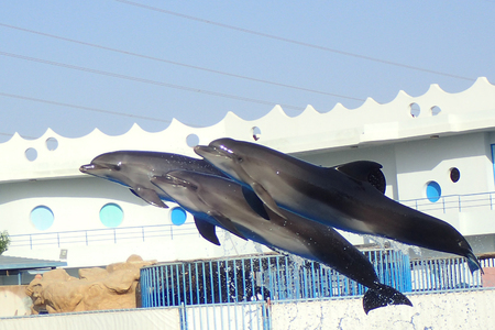 three dolphins are flying in the pool