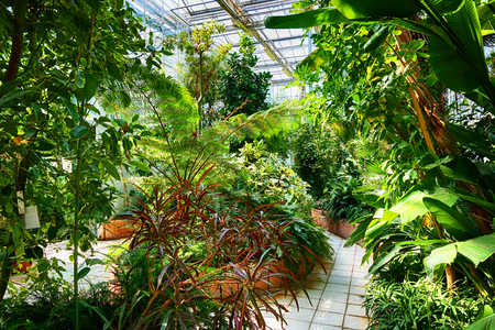 botany garden interior with nice green plants