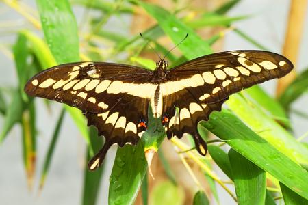 big tropical butterfly resting as nice natural portrait Reklamní fotografie