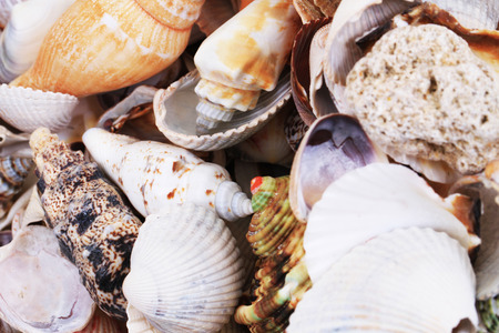 sea shells as very nice natural background