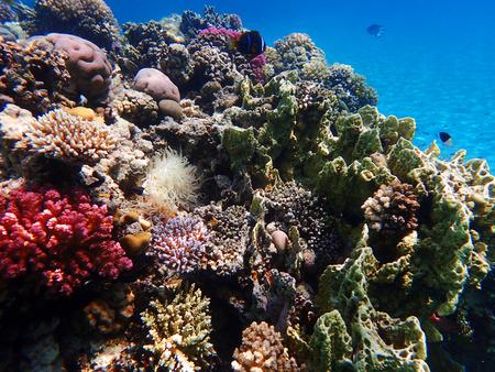 Arrecife de coral en Egipto como bonito paisaje natural