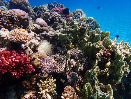 récif de corail en egypte comme beau paysage naturel