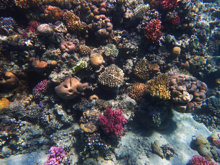 coral reef in egypt as nice natural landscape Foto de archivo