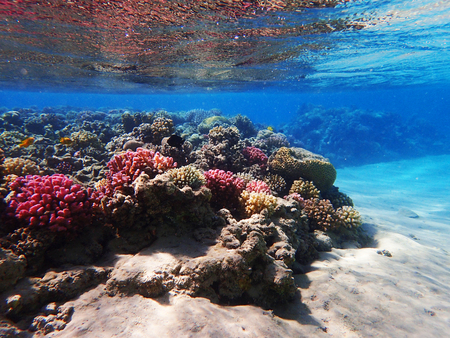 coral reef in egypt as nice natural ocean background