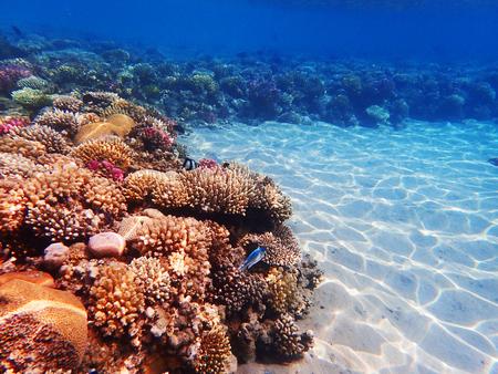 Arrecife de coral en Egipto como bonito paisaje natural Foto de archivo