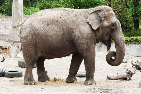 small elephant from africa as one of biggest animal