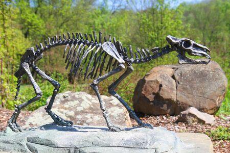 skeleton of horse Eohippus as very nice model
