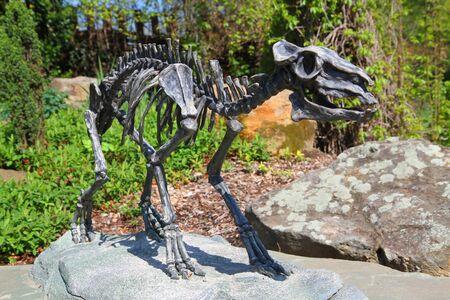 skeleton of horse Eohippus as very nice model Imagens - 129963734